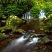 Toolona Cascade by Mark Wassell