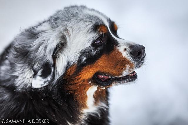Sweet Dog
