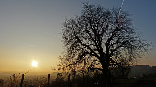 sunset sun tree nature landscape sonnenuntergang natur landschaft sonne baum chestnuttree rafz kastanienbaum zürcherunterland