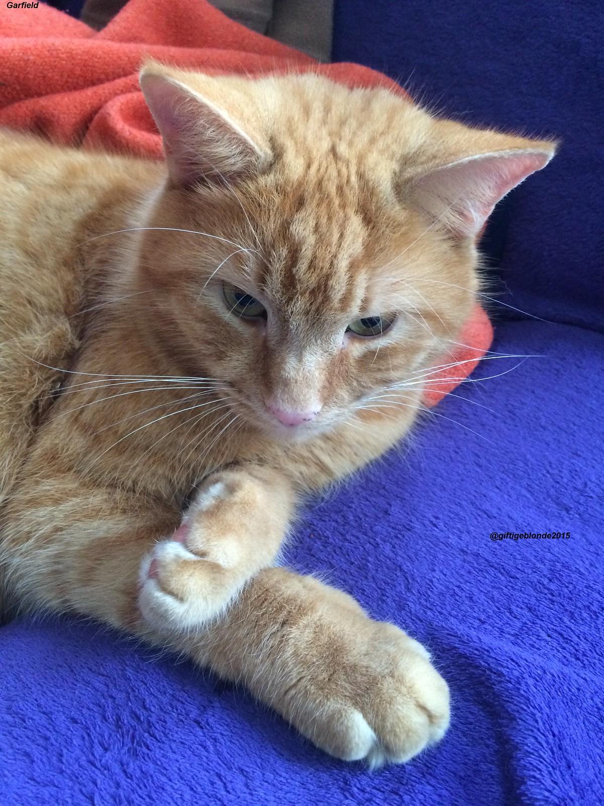 Garfield sooo süß