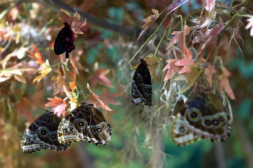 Audubon Insectarium 4