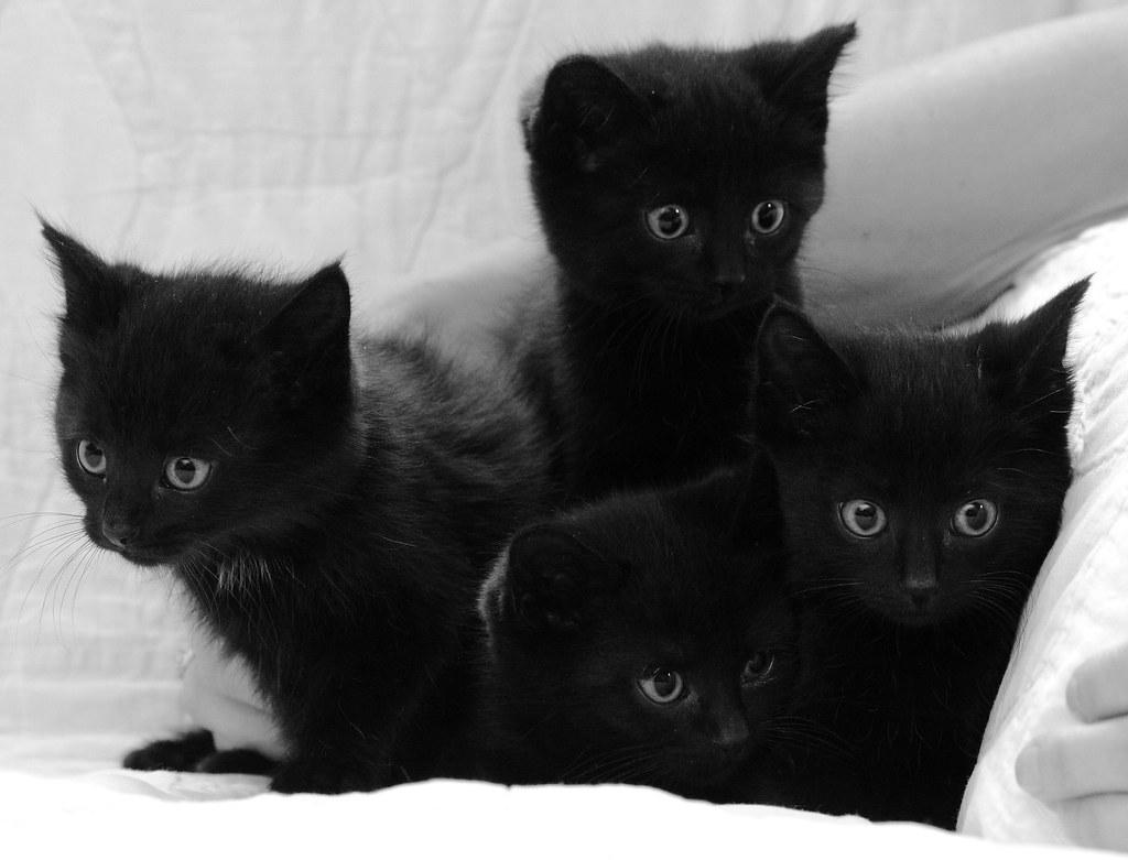 Image result for black kitten pictures