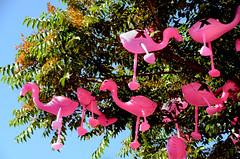 Roosting Flamingos