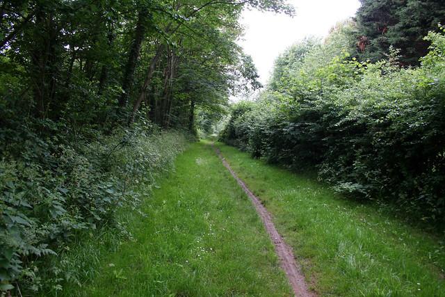 Path in Fawley