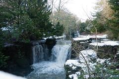 Winter 2013 (Jesmond Dene)  (8)