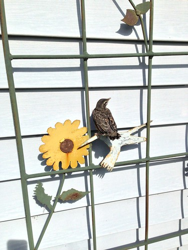 152_2013_wildcard by teach.eagle