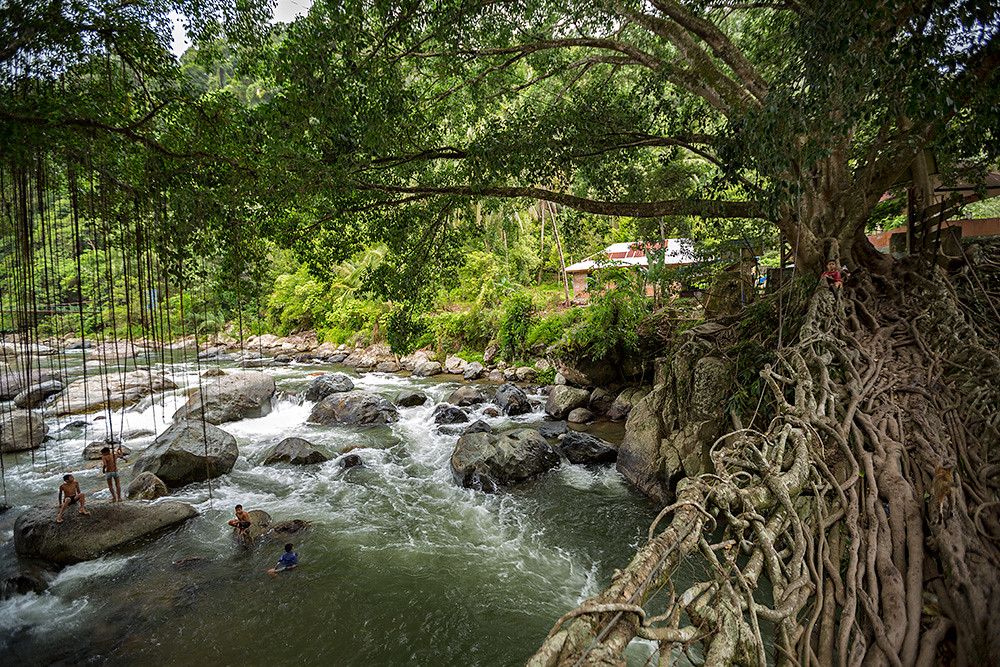 The living root brige located in Bayang village in West Sumatra, Indonesia.