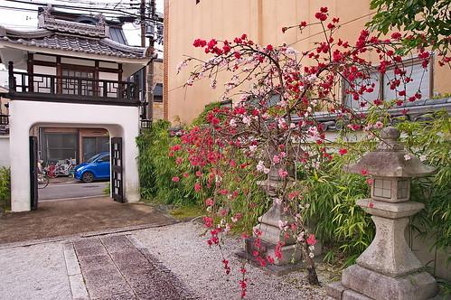 【写真】2013 桜 : 閑臥庵/2021-07-16/IMGP9638