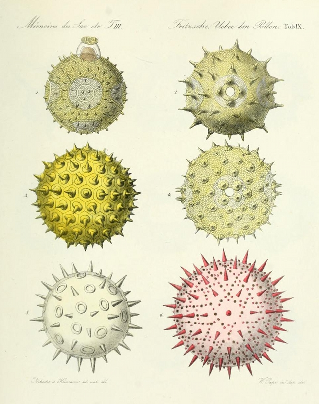 pollen up close 1837 the public domain review