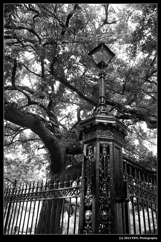Light post and tree