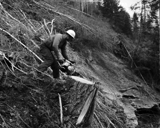Logger working near Z Canyon, 1965