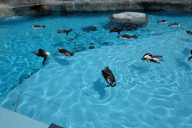 130901家族で日本平動物園 066