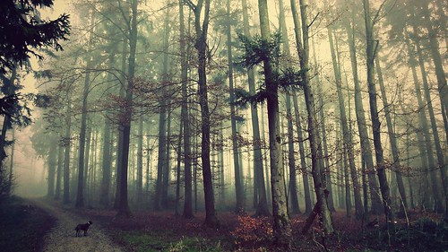 wood dog nature sunshine fog forest sunrise landscape switzerland foggy wenttothewoods