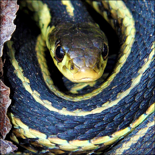 Snakes or bears: which are more dangerous?
