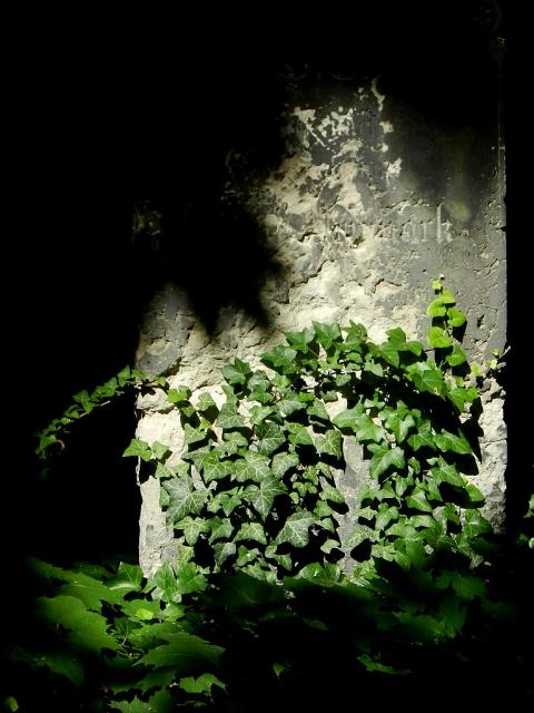 Jüdischer Friedhof Berlin_2013_4