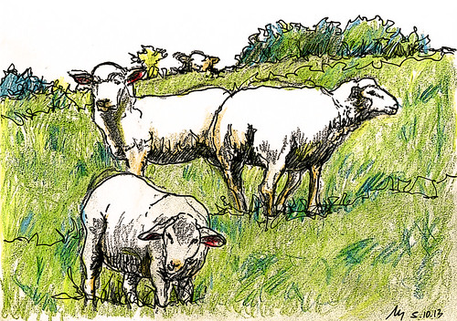 Sheep from Rechtenfleth by manfred schloesser