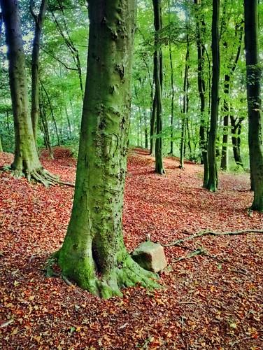 autumn fall october seasons walk welovenature streamzoo weluvstreamzoo awesomautumn