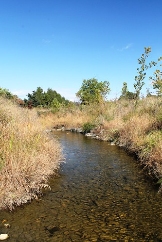 Image of stream and stream bank grass.