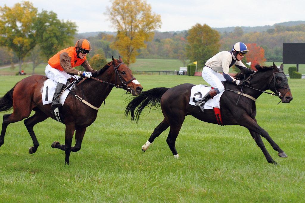 Fall Gold Cup 2013