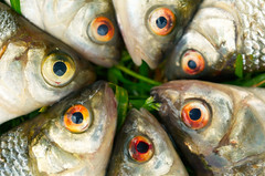 Researchers Detect Alarming Levels of Formaldehyde in Fish Imports