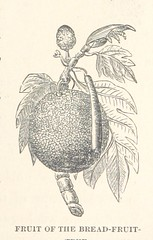 """Image taken from page 173 of 'What Mr. Darwin saw in his Voyage round The World in the Ship """"Beagle."""" [Compiled and adapted from """"Journal of Researches into the Geology and Natural History of the Various Countries visited by H.M.S. Beagle, etc.""""]'"""