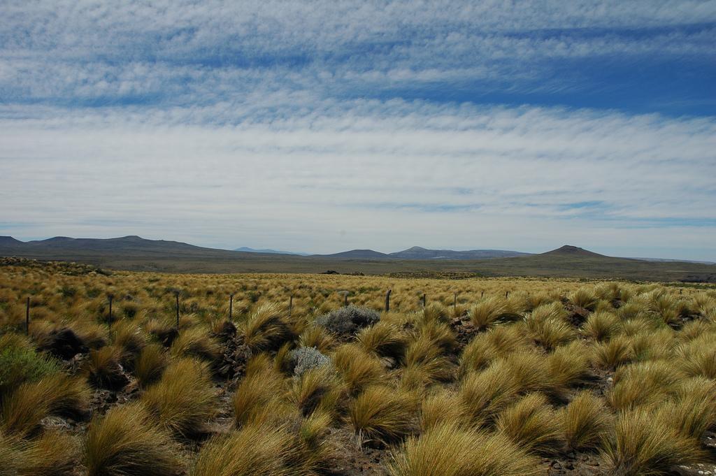 8. Estepa entre Zapala y Villa Pehuenia, Neuquén, Patagonia. Autor, Valerio Pillar