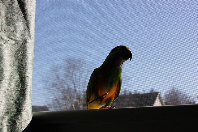 Birds' Arrival 244