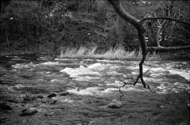 木と川 - Tree and river