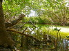 Red Mangrove Grotto