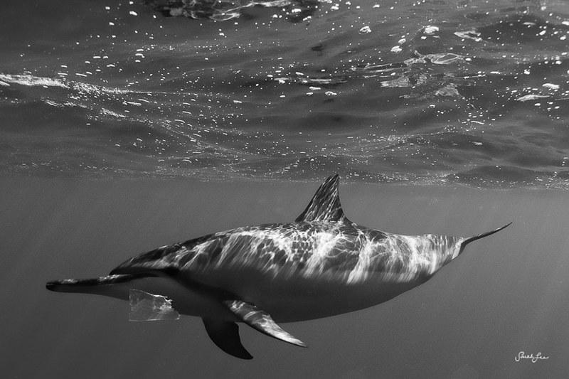 spinner_dolphin_wild_trash.jpg