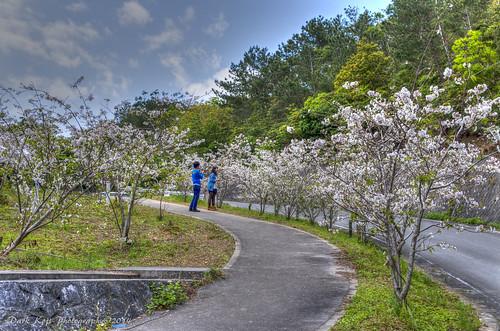 クメノサクラ | Okinawa, Japan #1