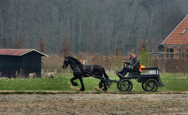 Horse and carriage in Vossenveld, hamlet of Winterswijk - Achterhoek