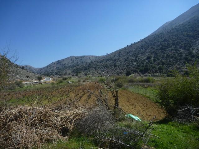 plaine du lasithi