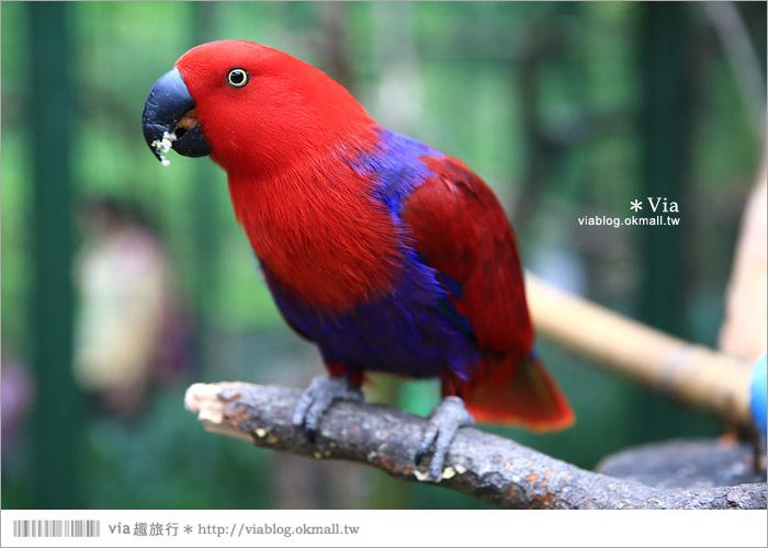 【新竹景點推薦】森林鳥花園~親子旅遊的好去處!在森林裡鳥兒與孩子們的樂園41