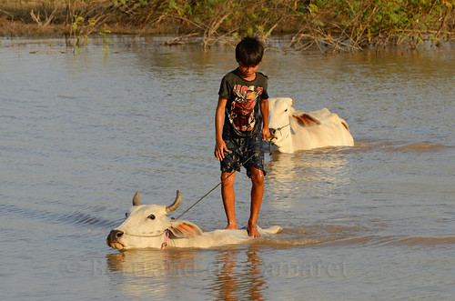 sunset water horizontal cow asia cambodge cambodia eau child ngc asie enfant navigation mekong vache coucherdesoleil nationalgeographic kampongcham bertranddecamaret