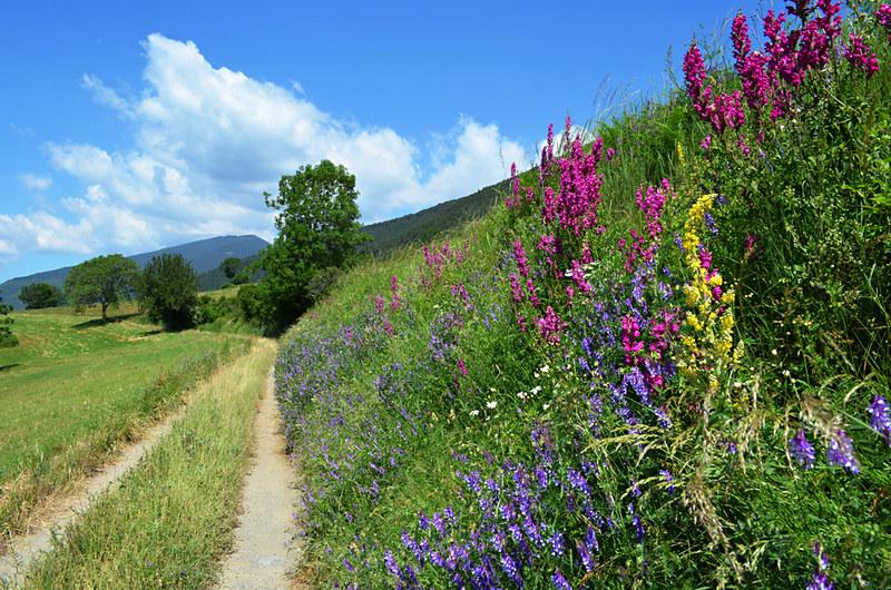 Wild Flowers, Ribes de Freser, Spain
