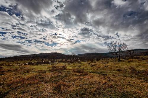 travel panorama nature grass animals landscape panoramic slovenia karst sheeps koper grassfield panoramicview landscapephotography panoramicphotography landscapeview ifeelslovenia travelslovenia showinmyeyes bezovica fotobyiztokkurnik