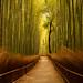 Path to serenity by Eva R. Lima