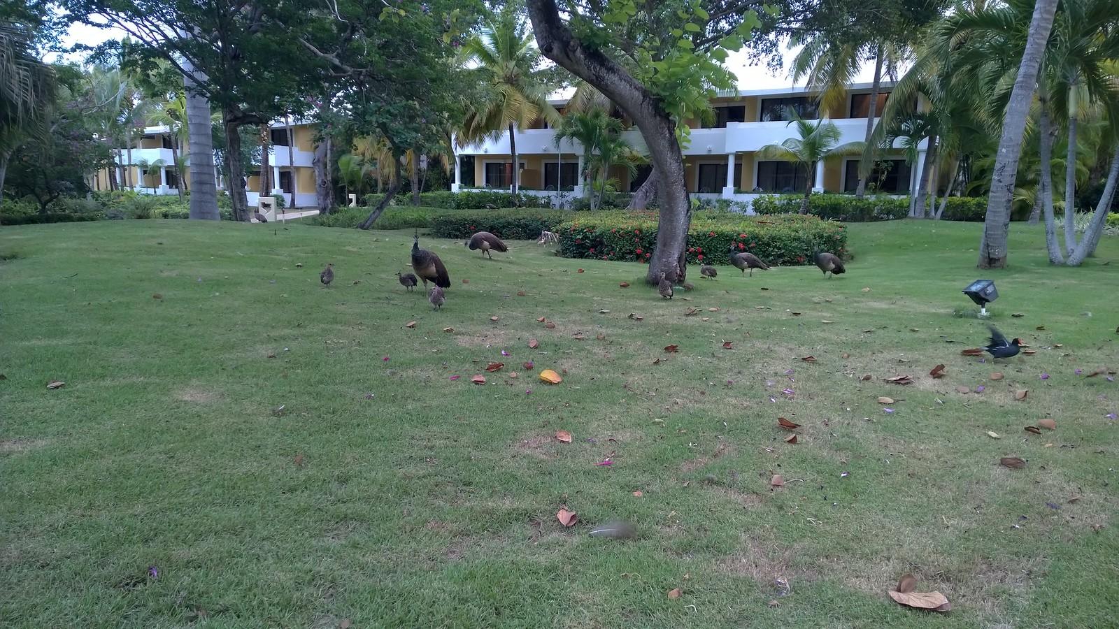 Luxery-отель Now Larimar Punta Cana