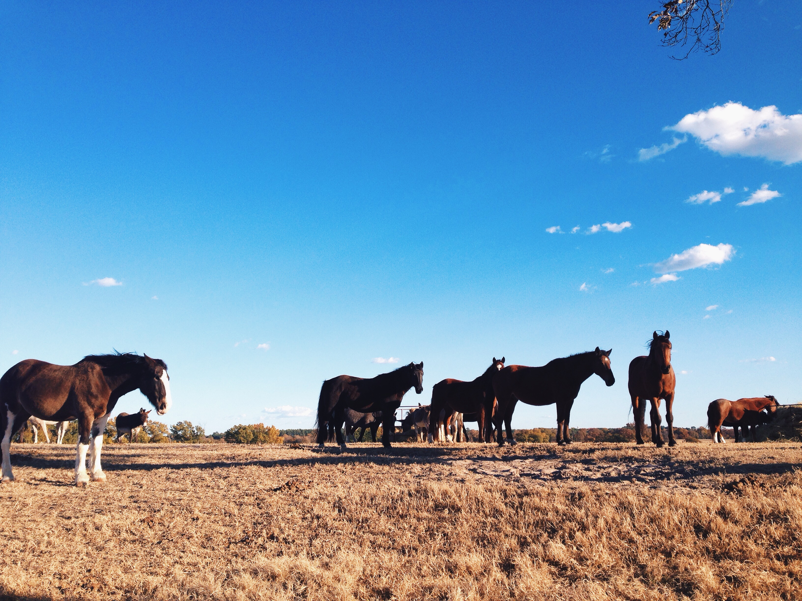 Black beauty ranch in murchison texas — pic 9