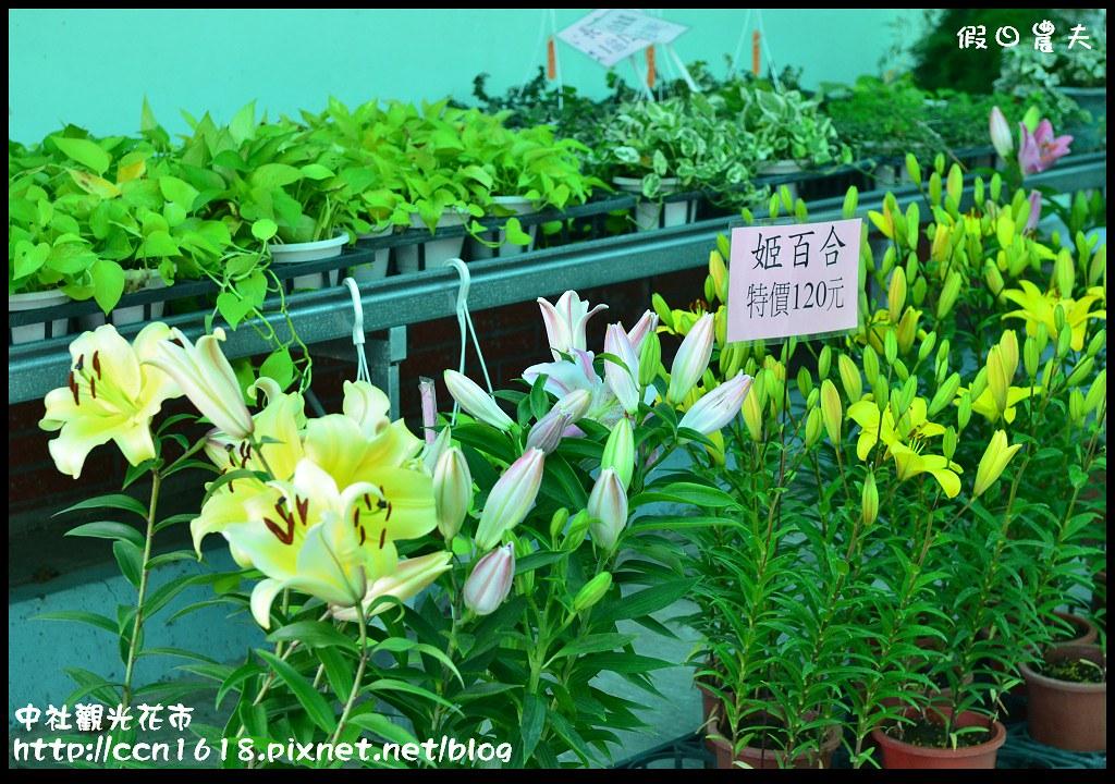 中社觀光花市DSC_1668