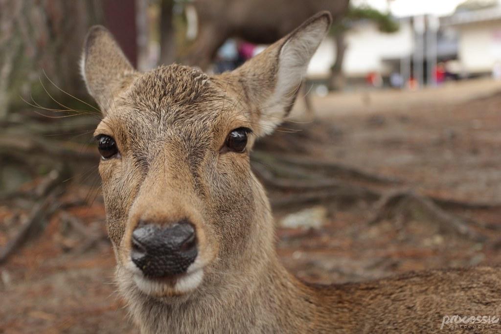 Nara_0025