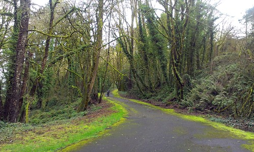 Water Board Park Road, Oregon City. This abandoned road was beautiful but way wrecked! A bit of hike-a-bike.