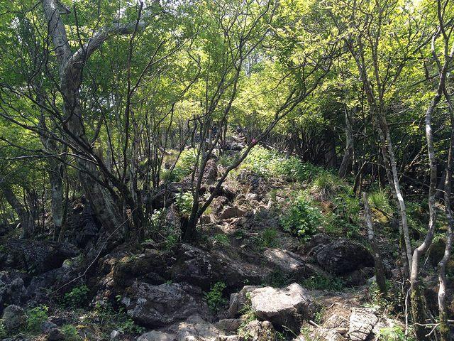 竜ヶ岳 金山尾根 登山道