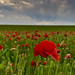 Remembering the Somme 100 years ago today, never again . by Through Bri`s Lens