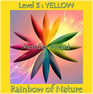 RoN_3Yellow_Member