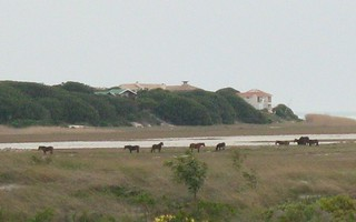 The wild horses of the Bot River