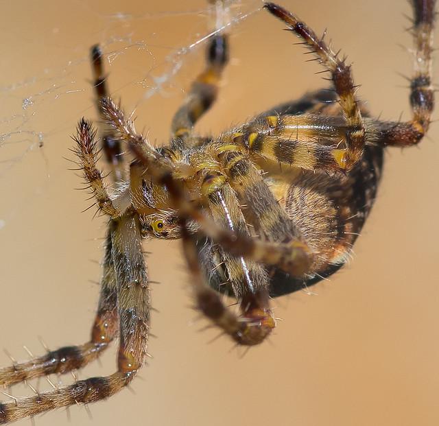 Spider macro | Explo