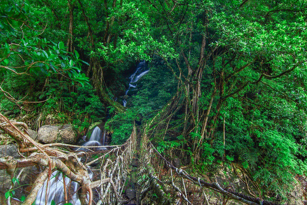 Living Root Bridges of Khasi Hills, Meghalaya
