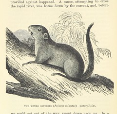 """British Library digitised image from page 380 of """"Adventures in the Great Forest of Equatorial Africa and the country of the dwarfs .. An abridged ... edition ... With ... illustrations"""""""